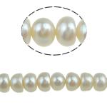 Button kultivierte Süßwasserperlen, Natürliche kultivierte Süßwasserperlen, weiß, 6-7mm, Bohrung:ca. 0.8mm, verkauft per 15 ZollInch Strang