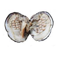 Süßwasser kultivierte Liebe wünschen Perlenaustern, Perlen, 6-7mm, verkauft von PC