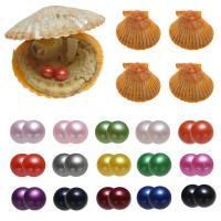 Akoya kultivierte Seeperle Oyster Perlen, Akoya Zuchtperlen, Kartoffel, gemischte Farben, 7-8mm, 15PCs/Tasche, verkauft von Tasche