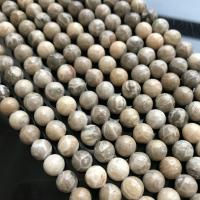 Fossil Korallen Perle, verschiedene Größen vorhanden, verkauft per ca. 15 ZollInch Strang