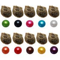 Akoya kultivierte Seeperle Oyster Perlen, Akoya Zuchtperlen, Kartoffel, gemischte Farben, 7-8mm, 10PCs/Menge, verkauft von Menge