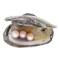 Oyster & amp; Wunsch Perlen-Kit, Natürliche kultivierte Süßwasserperlen, Kartoffel, keine, 11-12mm, verkauft von PC
