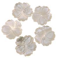 Natürliche weiße Muschelperlen, Blume, weiß, 30x29x2mm, Bohrung:ca. 1mm, verkauft von PC